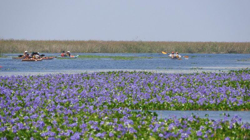 kayak_esteros