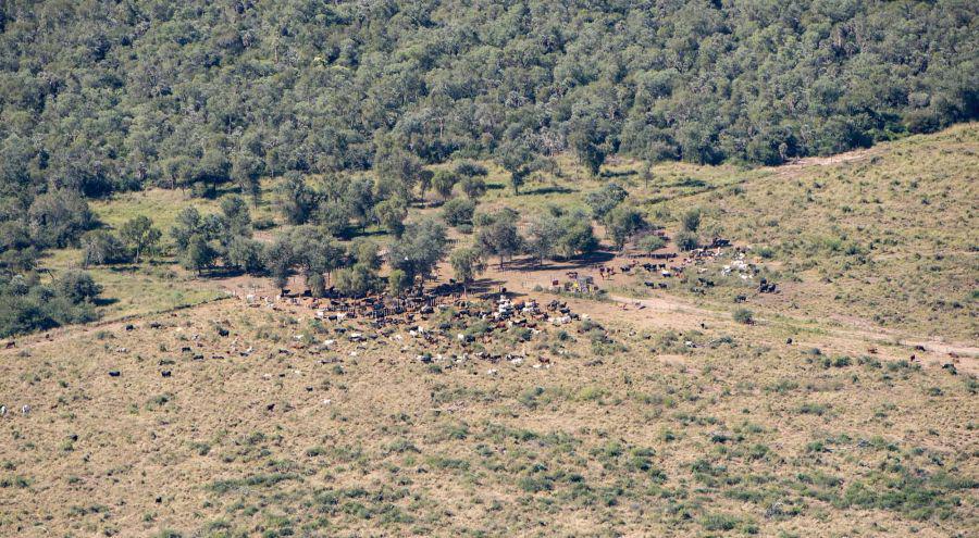 deforestacion-chaco